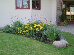 tulbalgias, follaje grisaceo:lavandas y curry alternadas,  calendulas amarillas violas violetas y amarillas