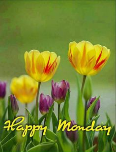 Good Morning Picture, Good Morning Flowers, Good Morning Good Night, Good Morning Images, Monday Greetings, Good Morning Greetings, Amazing Flowers, Beautiful Flowers, Happy Monday Morning