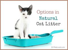 Natural Cat Litter Choices: Use What Works Best For Your Pet