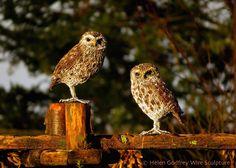 Wire owls