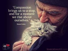 "Compassion does not hurt. Compassion not done is a bastard horror that should be outlawed. ""should"" a word without teeth. Crazy Cat Lady, Crazy Cats, I Love Cats, Cute Cats, Gatos Cool, Cat People, Rise Above, Faith In Humanity, Belle Photo"