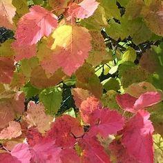 L'autunno in Romagna. Uno spettacolo di colori!
