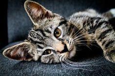 cats funny,cats diy,cute cats,cats nails  #flychord #flychordpiano