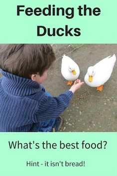 A Green and Rosie Life: Don't feed the ducks bread - feed them ....