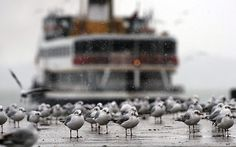 Istanbul, Turkey | Seagulls stand on a frozen part of the Bosphorus