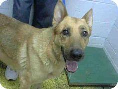 Atlanta, GA - German Shepherd Dog Mix. Meet GIGI, a dog for adoption. http://www.adoptapet.com/pet/12835363-atlanta-georgia-german-shepherd-dog-mix