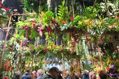 Stranded at the Philly Flower Show plus Hits Misses and Fun Facts by Susan Harris