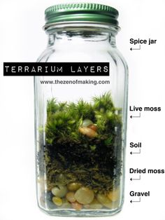 DIY: Terrariums