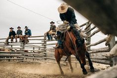 Rodeo Rider, Cowboy And Cowgirl, Farm Life, Country Girls, Westerns, Camel, Horses, Photo And Video, Instagram Posts