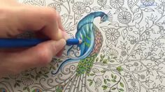 Peacock (Part 2/3) | Secret Garden Adult Coloring Book | Coloring With C...