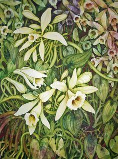 Vanilla Orchid watercolor painting, 30 x 22,  by Helen Klebesadel.