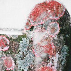 "Self-portrait Río de Janeiro 2017. Of the series: ""Territories"" . . . . . . . . . . . . . . . . . . . . #art #artwork #work #territory #territories #territorio #nature #naturaleza #naturevshuman #landscape #lands #ground #selfportrait #tree #autoretrato #me #mariagraciaegoaguirre #VSCO #vscocam #vscogallery #vscogirl #vscodaily #brazil #photography #photomontage #photoshoot http://tipsrazzi.com/ipost/1509479897087702144/?code=BTyv_gFgXSA"