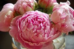 Maybe one day, I'll plant some peonies in my backyard