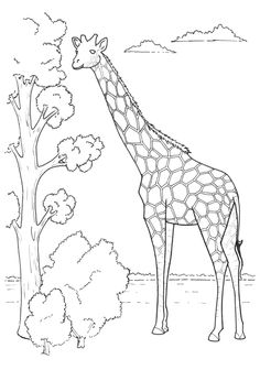 giraffe coloring picture