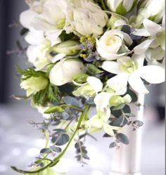White Flowers with Blue/Silver Foliage