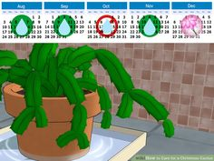 Image titled Care for a Christmas Cactus Step 7