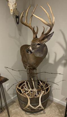 Deer Hunting Decor, Deer Head Decor, Whitetail Deer Hunting, Taxidermy Decor, Taxidermy Display, Deer Mount Decor, Whitetail Deer Pictures, Deer Antler Crafts, Big Deer