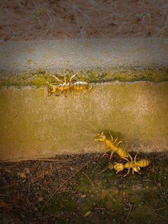 #Broches. Hormigas realizadas en latón./ Ise Soldevila Joyas®