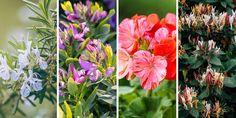 Πώς φτιάχνουμε κήπο με ανθισμένα λουλούδια όλο τον χρόνο Cool Plants, Nature, Gardens, Naturaleza, Outdoor Gardens, Nature Illustration, Off Grid, Garden, House Gardens
