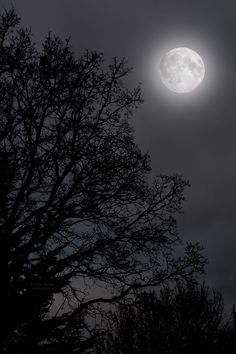 February's Full Moon by Abi Ashra (Tumblr)