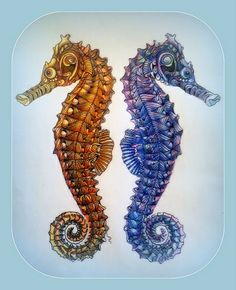Ben's seahorse template | Flickr - Photo Sharing!