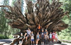 Majestic California: The Pacific, Redwoods & Yosemite -  Our family California travel adventure takes you from the Golden State's shining seas to its giant trees as you explore San Francisco, Yosemite National Park and the Monterey Peninsula together.
