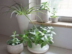 Bathroom plant ideas for decorate your home with plants Kitchen Plants, Bathroom Plants, Kitchen Decor, Large Indoor Plants, Living Room Plants, Simply Home, Decoration Plante, Concrete Crafts, Easy Home Decor
