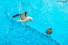 Birds on Ice por Jean Paul De la Harpe · www.turismonacional.cl