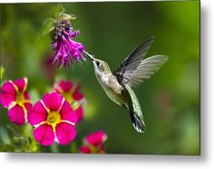 Hummingbird Metal Print featuring the photograph Hummingbird With Flower by Christina Rollo