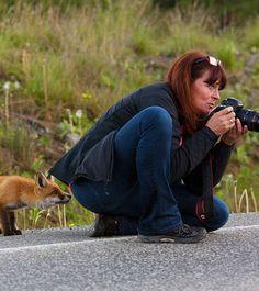 Photo : Ce renard semble très intrigué par cette photographe