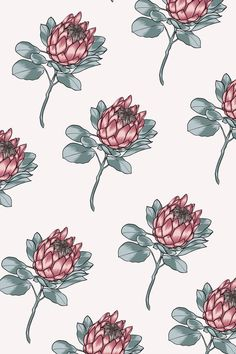 Illustrated Protea Pattern by Someday Art Co Engraving Illustration, Portrait Illustration, Digital Illustration, Protea Art, Protea Flower, Floral Illustrations, Botanical Illustration, Flower Prints, Flower Art