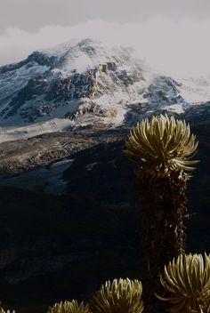 Located Near Aragosta Hotel, Colombia (/kəˈlʌmbiə/ Colombia Travel, Dinosaur Art, Mount Rainier, Mount Everest, Beautiful Places, Nature, Travelling, Vsco, Hotels