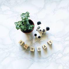 """""""Mi piace"""": 32, commenti: 1 - valentINA de vecCHIS (@inachislifestyle) su Instagram: """"#domenica #buonadomenica #sunday #happysunday #flatlay #sundayflatlay #panda #succulent #buongiorno…"""""""