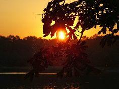 Sunset through chestnut tree leaves