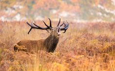 call by bridgephotography #animals #pets #fadighanemmd