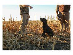 Fall Favorites | Prairie & Wild
