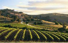 Barossa Valley-South Australia