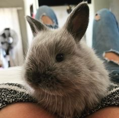 This baby bunny totally stole my heart today... #bunny #dwarfbunny #love #animalobsessed