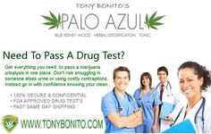 Pass a marijuana drug test easily with our Palo Azul. No matter the reason, be it for probation or just to get a job our Palo Azul can effectively flush THC from your system helping you to pass a drug test. Don't risk smuggling in contraptions or using chemicals to beat the test, instead go in to take a drug test naturally clean! http://www.tonybonito.com/ #paloazul #detoxtea #homedrugtest #passadrugtest #passamarijuanatest