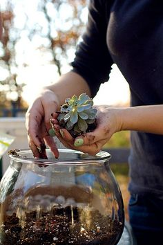 im addicted to succulents and terrariums...this is a good one