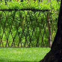 Living Fences: 11 Boundary-Setting Solutions | Living Fence Willow | Bob Villa