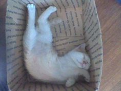 Cats can conform to the size of the container...