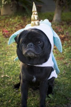 Confessions of a Pug Mum: Dressing Pugs Up http://www.thepugdiary.com/confessions-pug-mum-dressing-pugs/