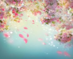 Flowers Background, Baby Blue Background, Cherry Blossom Background, Backdrop Background, Wedding Background, Pattern Background, Background Templates, Photo Backgrounds, Blue Backgrounds