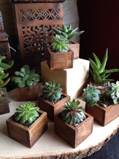 56 Incredibly Amazing DIY Succulents Project Ideas The benefit of succulents is they can be indoors OR outdoor plants. They go beyond hens and chicks there are many types of succulents. Types Of Succulents, Cacti And Succulents, Planting Succulents, Planting Flowers, Outdoor Plants, Air Plants, Cactus Plante, Air Plant Display, Diy Planters
