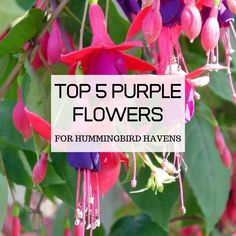 Find out what the 5 best purple flowers for attracting hummingbirds to your yard are, and learn how to properly grow them to maximize their potential. Pink And Purple Flowers, Lavender Blue, Deep Purple, White Flowers, Attracting Hummingbirds, Flowers That Attract Hummingbirds, Purple Flowering Plants, Hummingbird Flowers, Flower Images