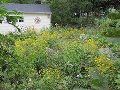 Sustainable Landscape Design & Architecture in Ann Arbor, MI Prairie Garden, Landscape Architecture Design, Ann Arbor, Sustainability, Shed, Backyard, Outdoor Structures, Nature, Plants