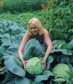 Wow! Look at those Pretty Cabbages! Wanna learn how to grow cabbage from seed that looks amazing? Read here: http://gardennlawn.com/how-to-grow-cabbage-from-seed/
