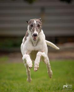 Greyhound Gardens – Itsa Greyt Day
