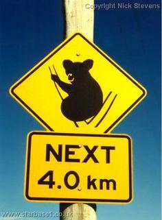 koala-road-sign